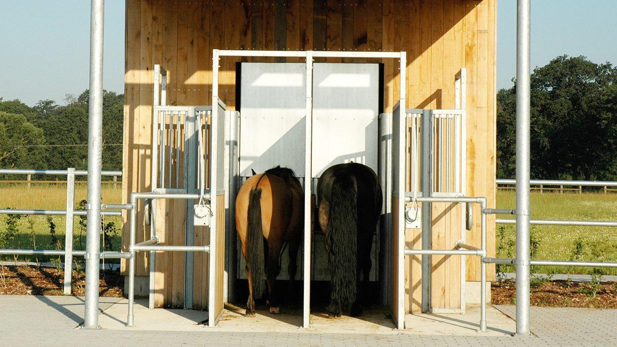 Zwei Pferde fressen Hau in der Futterstation