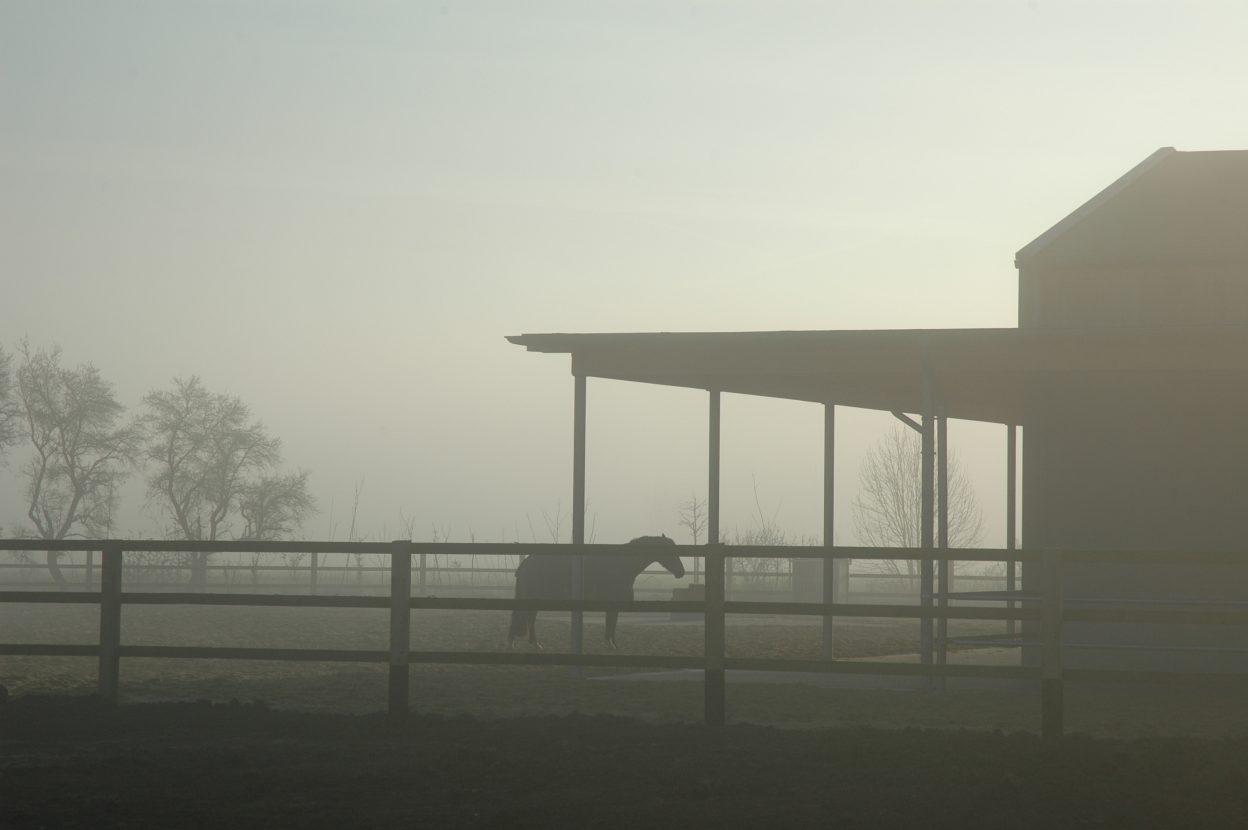 Paddock im Morgengrauen